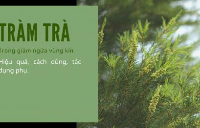 Cây tràm trà giảm ngứa vùng kín: Hiệu quả, cách dùng, tác dụng phụ